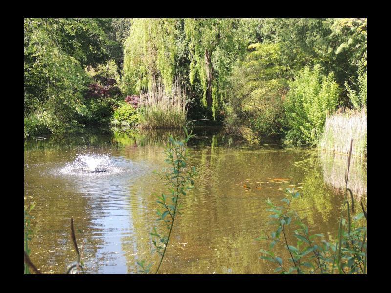 Reed Pond